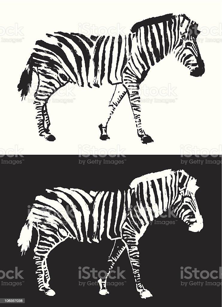 Royalty Free Zebra Pro...