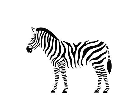 Zebra logo. Isolated zebra on white background