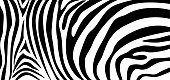 Zebra pattern texture repeating. Simple pattern, black line for textile design fabric. horizontal backdrop, black chaotic stripe isolated on white. hand drawn vector illustration.