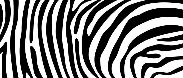 zebra pattern texture repeating. simple pattern, black line for textile design fabric. - jungle stock illustrations