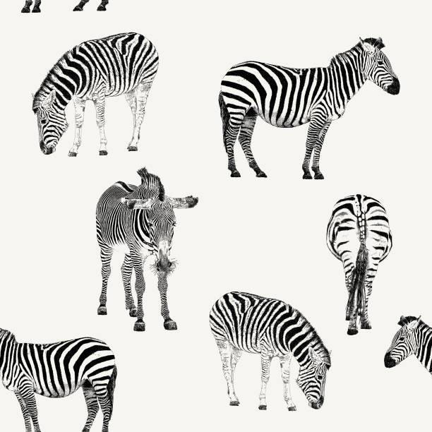 zebra wiederholen muster - zebras stock-grafiken, -clipart, -cartoons und -symbole