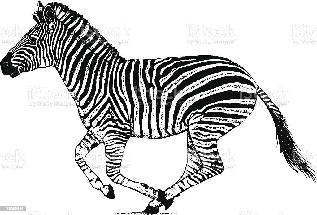 Line Drawings Of African Animals : Zebra running through the dust stock vector art more