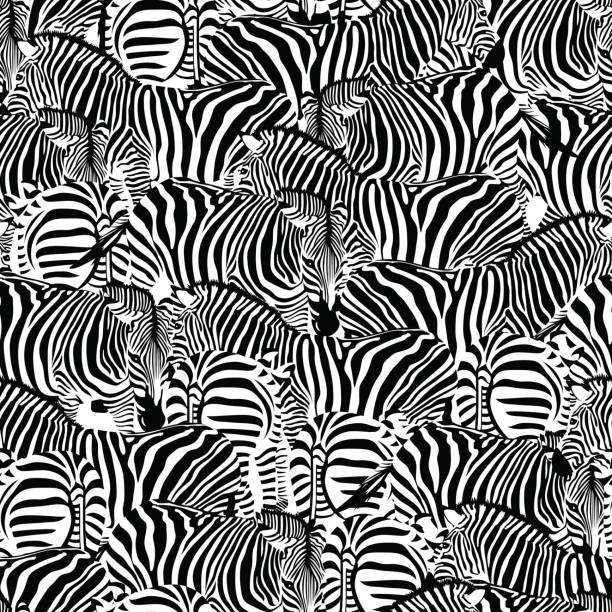 nahtlose zebramuster. wilde tiere textur. - zebras stock-grafiken, -clipart, -cartoons und -symbole
