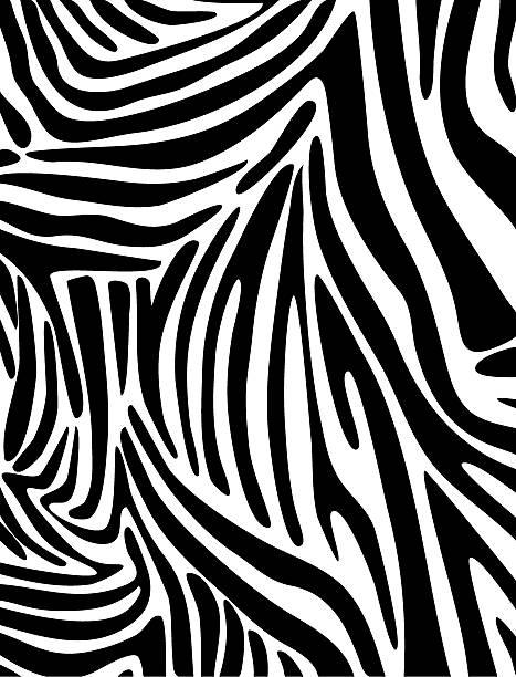 ilustrações de stock, clip art, desenhos animados e ícones de padrão de pele de zebra - padrões zebra