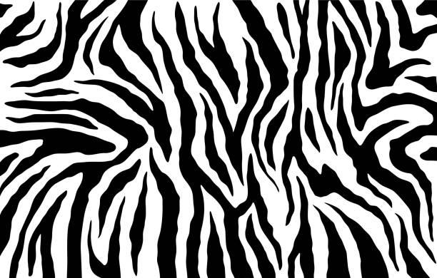 zebra haut, streifen-muster. animal-print. schwarz / weiß hintergrund. vektor-textur. - zebras stock-grafiken, -clipart, -cartoons und -symbole