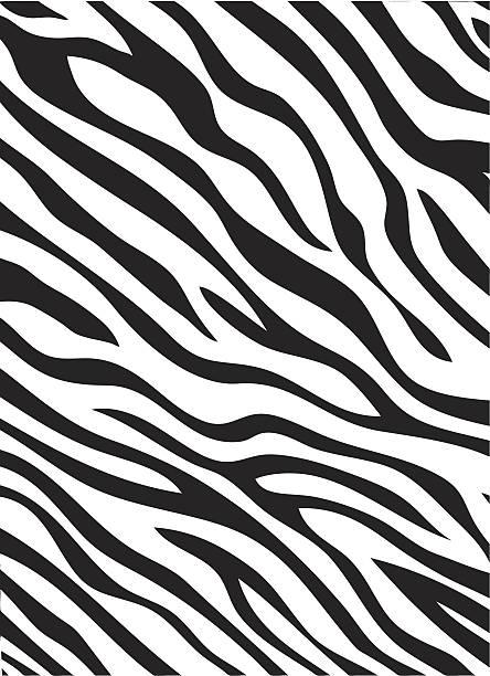 Zebra stripes pattern A vector illustration of a zebra striped pattern. animal markings stock illustrations
