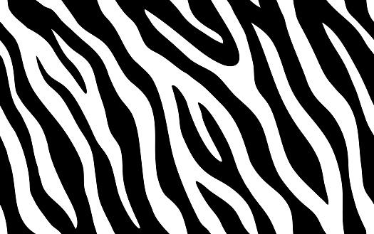 Zebra stripes seamless pattern. Tiger stripes skin print design. Wild animal hide artwork background. Black and violet vector illustration