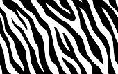 istock Zebra stripes seamless pattern. Tiger stripes skin print design. Wild animal hide artwork background. Black and violet vector illustration 1241776772
