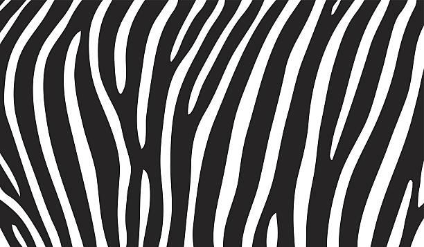 ilustrações de stock, clip art, desenhos animados e ícones de de zebra - padrões zebra