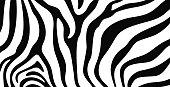 istock Zebra texture logo. Isolated zebra texture on white background 1289949767
