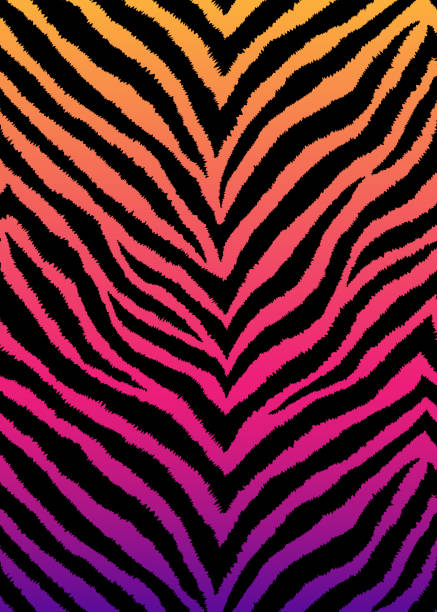 Zebra, tiger print, animal skin with zigzag lines, stripes. Abstract background. Detailed hand drawn vector illustration. Exotic gradient poster, banner. Zebra, tiger print, animal skin with zigzag lines, stripes. Abstract background. Detailed hand drawn vector illustration. Exotic gradient poster, banner. tiger stock illustrations
