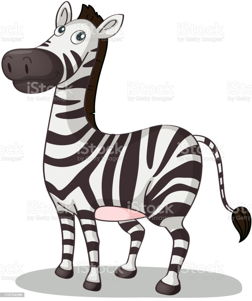 royalty free zebra white background clip art vector images rh istockphoto com