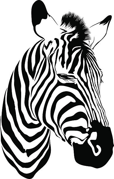 Royalty Free Zebra Head Clip Art, Vector Images ...