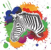 Zebra with Colorful Splashes Vector Illustration
