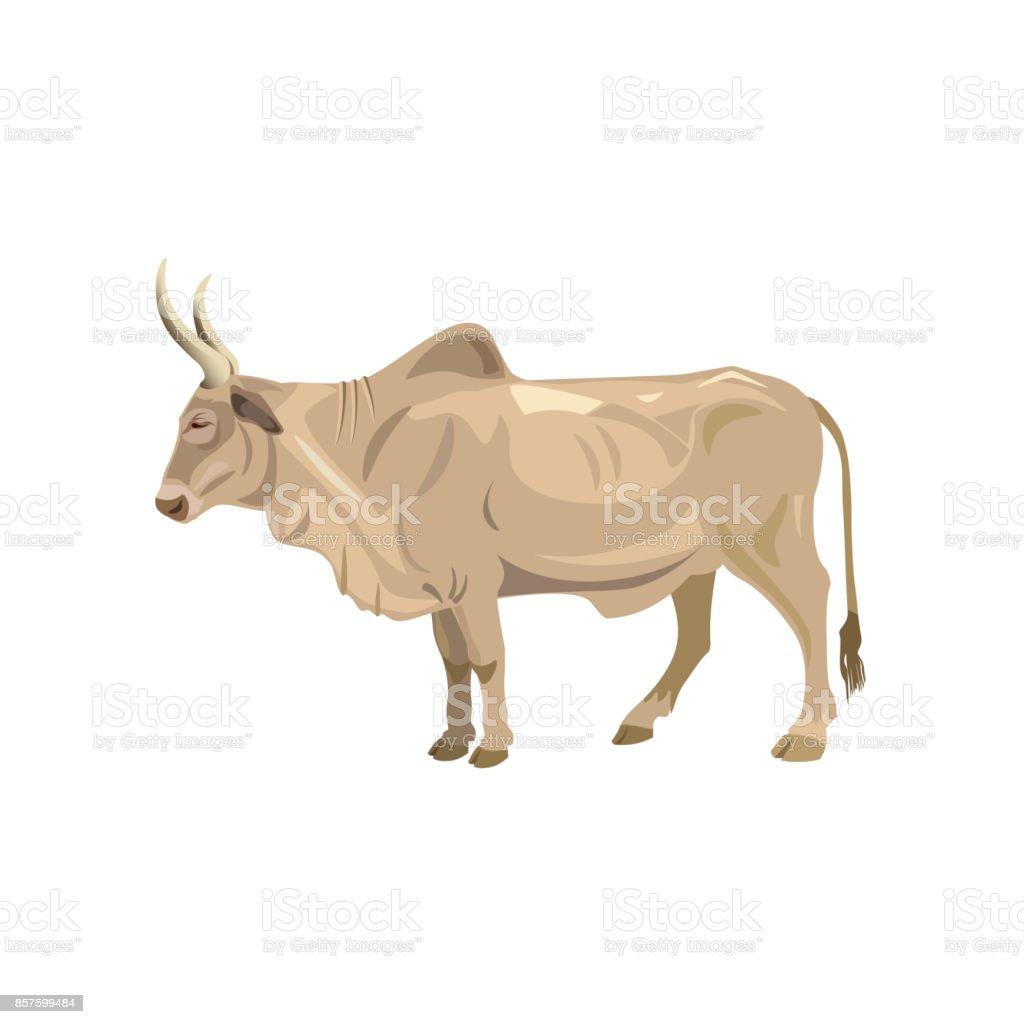 Zebu Bull Vector Stock Illustration