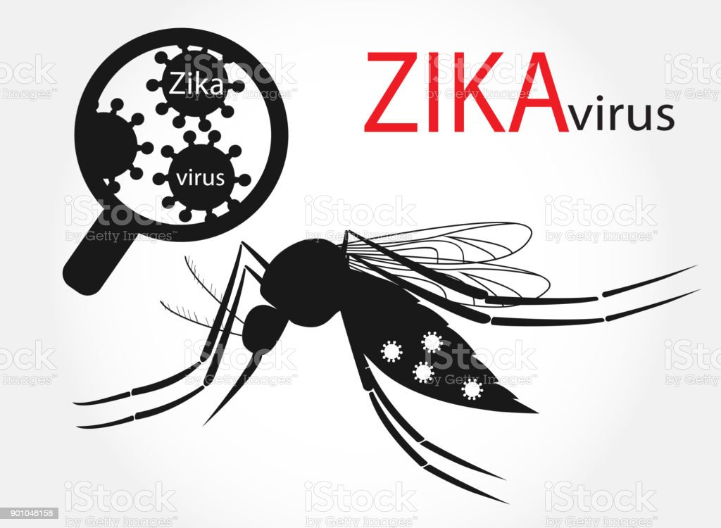 Zika virus and mosquito Aedes aegypti векторная иллюстрация