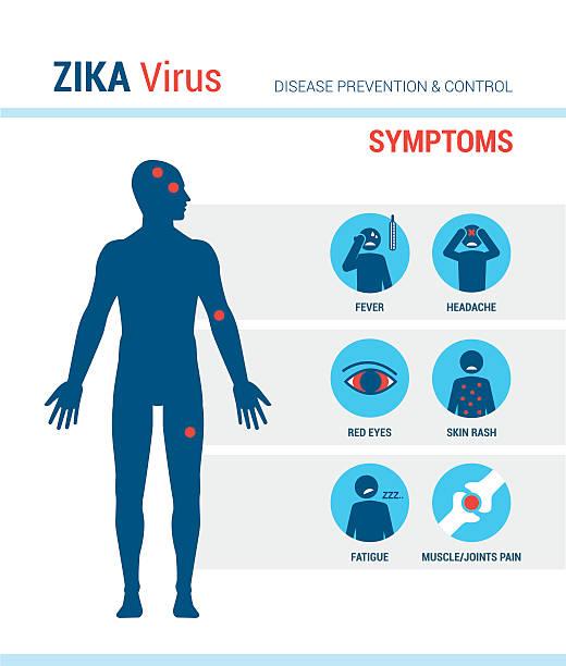 Zika virus symptoms Zika virus symptoms infographics with stick figures and text human muscle stock illustrations