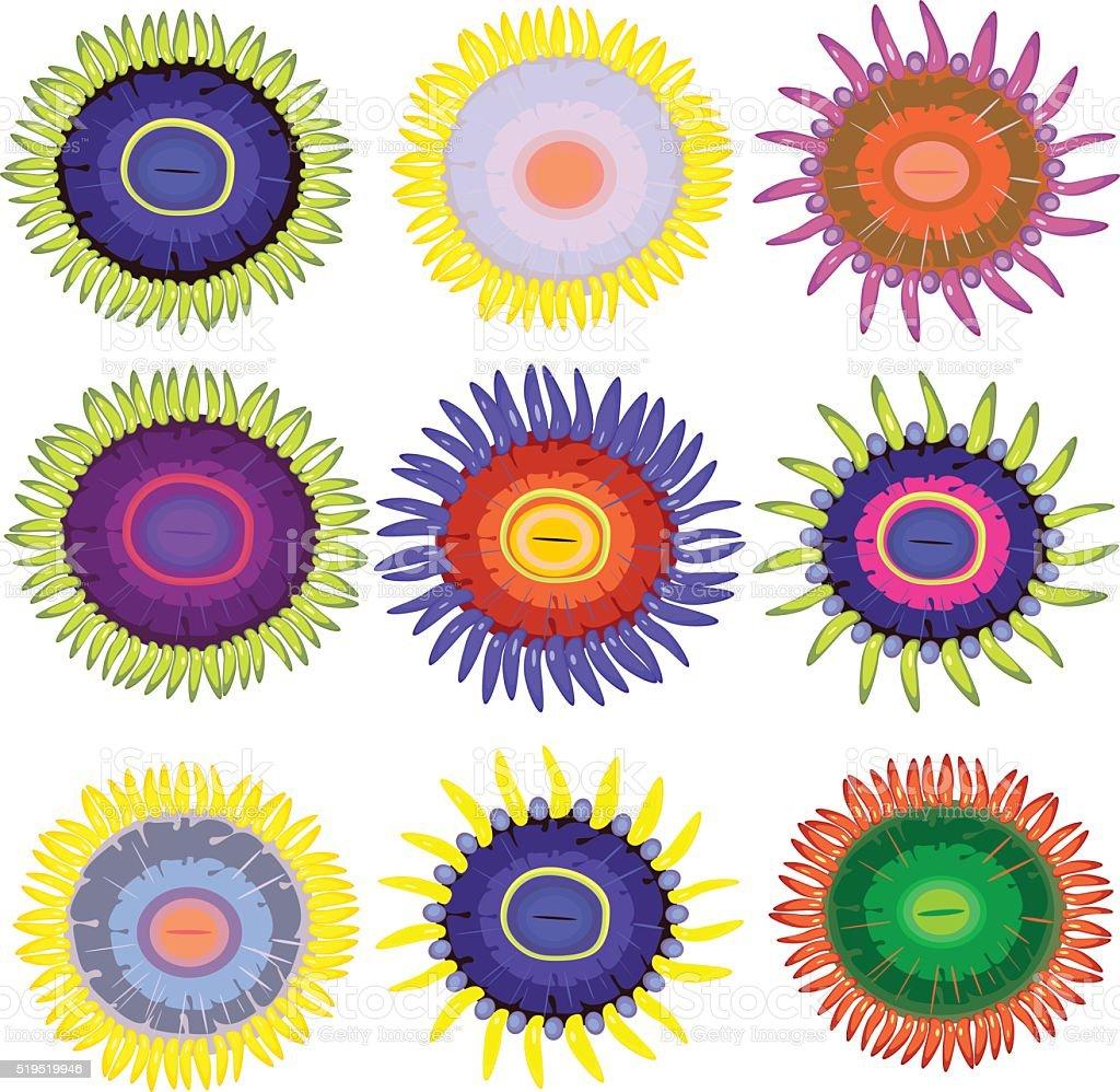 Zoanthus set vector art illustration