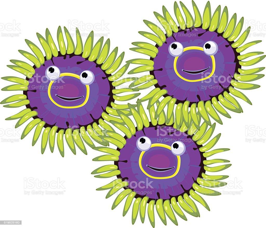 Zoanthus vector art illustration