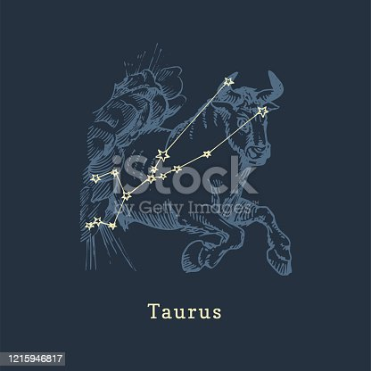 Zodiac constellation of Taurus on background of hand drawn symbol in engraving style. Vector retro graphic illustration of astrological sign Bull.