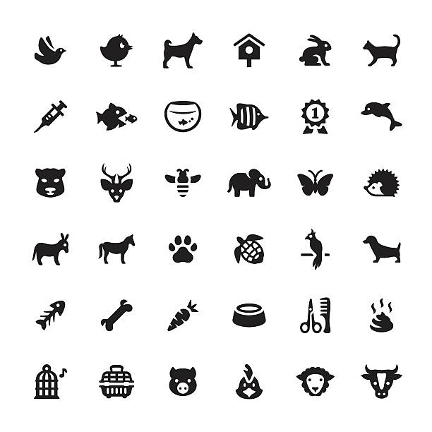 Zoo and Pets vector symbols and icons vector art illustration