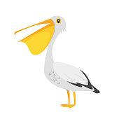 zoo animal - pelican