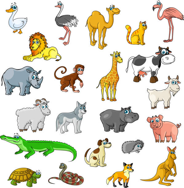 stockillustraties, clipart, cartoons en iconen met dieren in dierentuinen, vogels en huisdieren vector cartoon pictogrammen - afrikaanse vogel