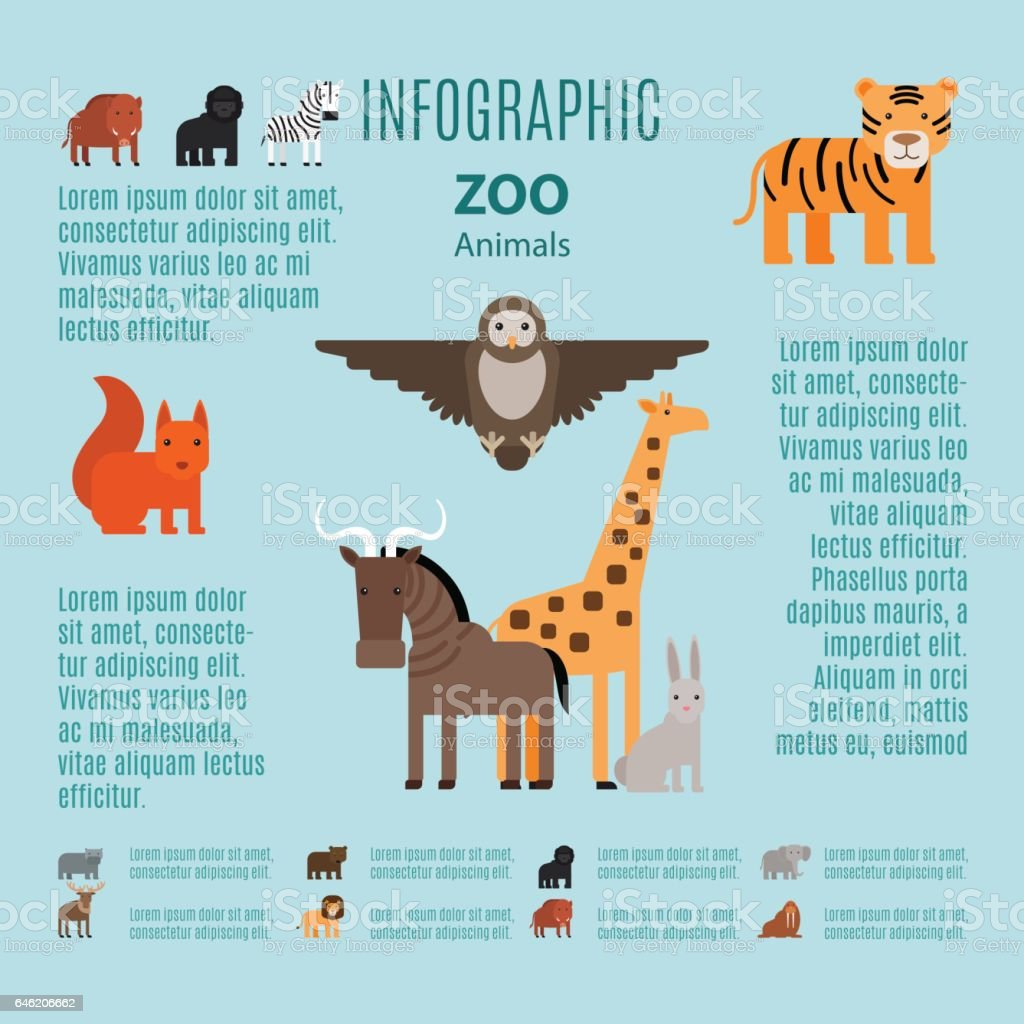 Zoo Animals Vector Infographic Stock Vector Art & More Images of ...