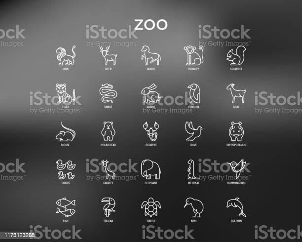 Zoo thin line icons set lion deer horse monkey tiger penguin hippo vector id1173123268?b=1&k=6&m=1173123268&s=612x612&h=4 oidufaftjspbadvtxm 4tdyrpk pxjt0oqozrgwba=