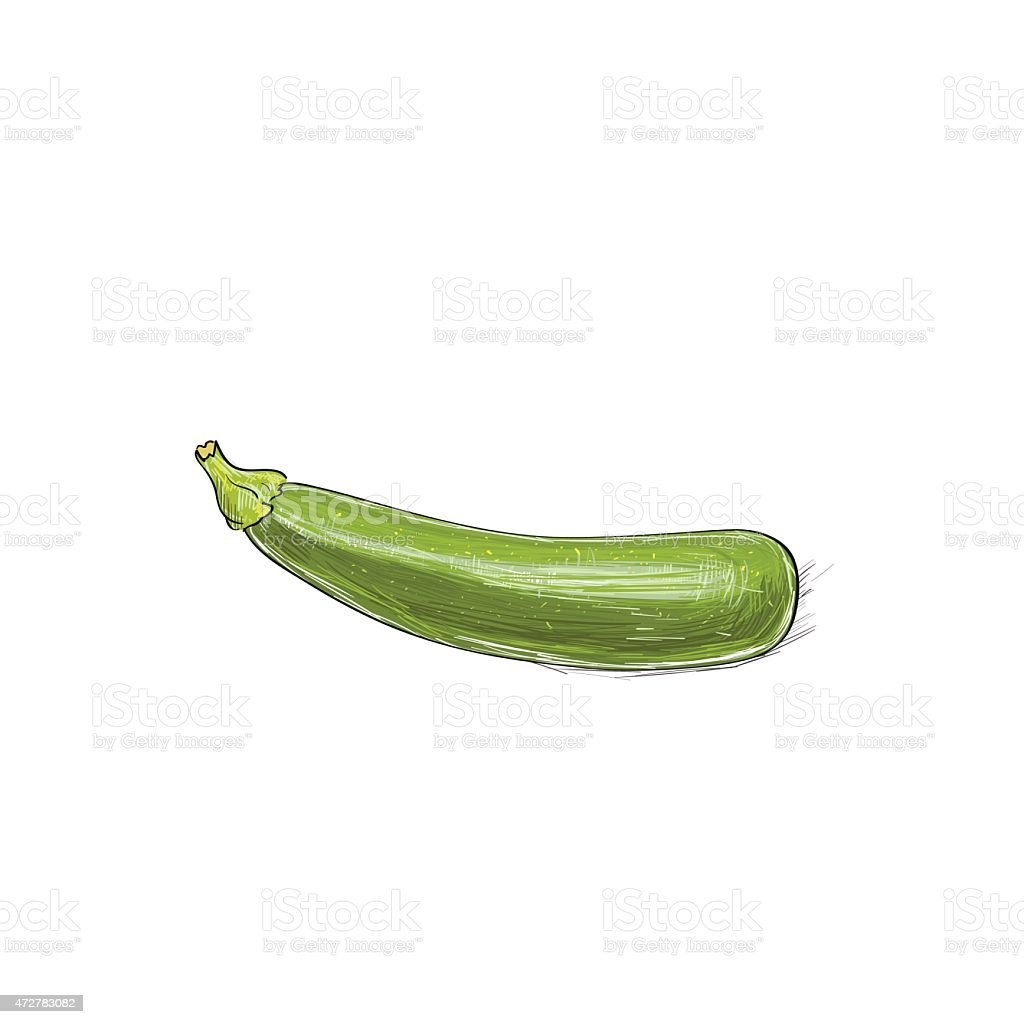 Zucchini Green Color Sketch Draw Isolated over White vector art illustration