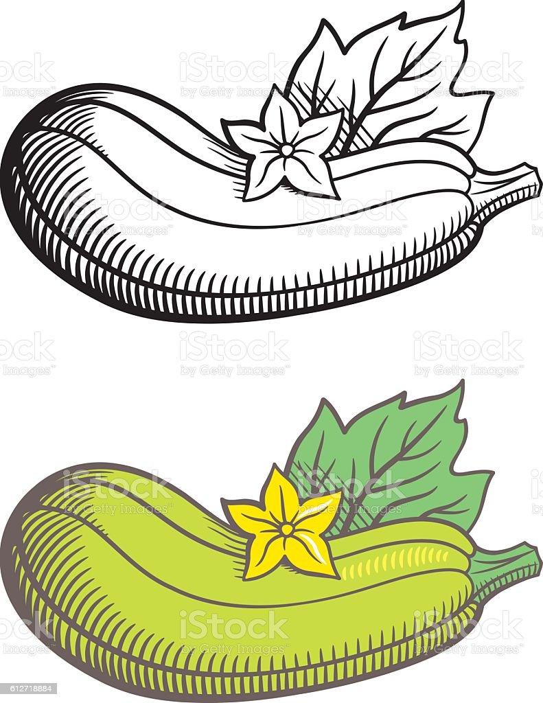 royalty free zucchini flower clip art vector images illustrations rh istockphoto com zucchini clipart images zucchini bread clipart