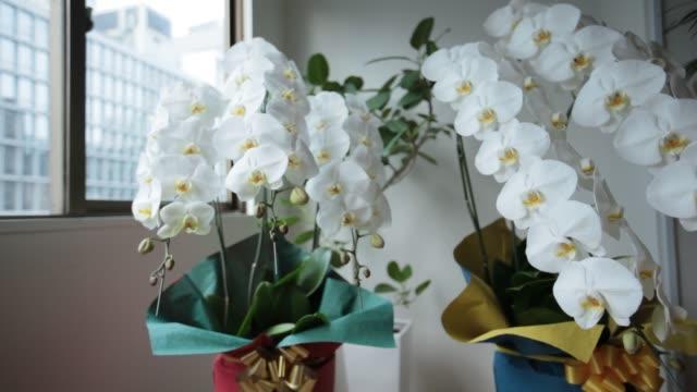 白い胡蝶蘭 - 贈り物点の映像素材/bロール