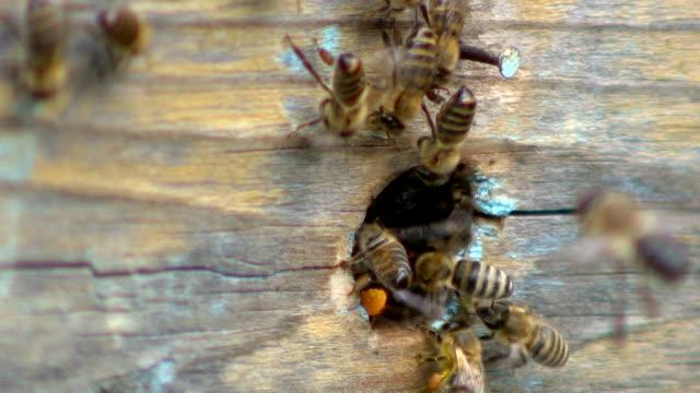 пчелиный улей - favo video stock e b–roll