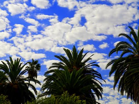 palm trees 1- pal - 10 saniyeden daha kısa stok videoları ve detay görüntü çekimi