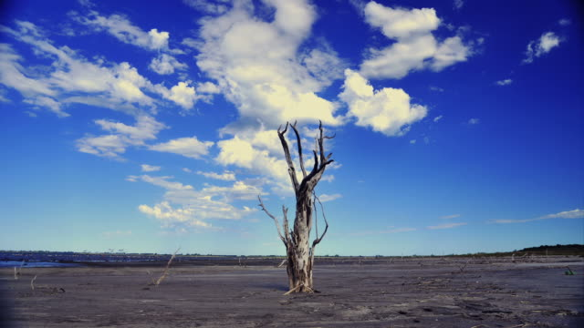 DEAD TREE AND CLOUDS  MAR CHIQUITA  ARGENTINA video