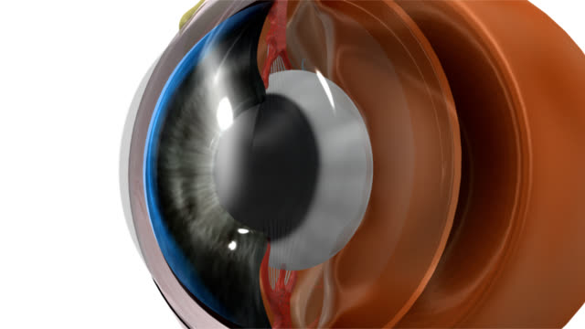 EYE LENS The human eye is an organ that reacts to light and has several purposes. As a sense organ, the mammalian eye allows vision. Rod and cone cells in the retina allow conscious light perception and vision including color differentiation and the perception of depth. blood vessel stock videos & royalty-free footage