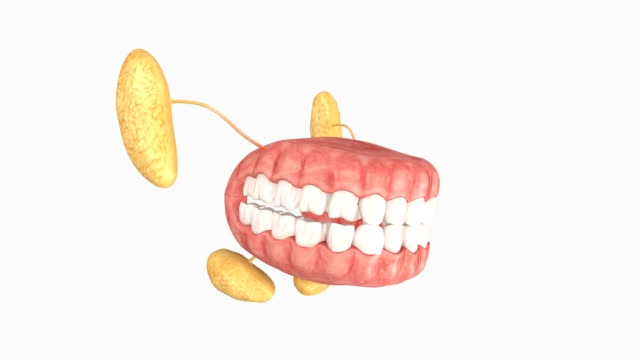 TEETH video