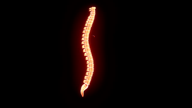 SPINAL CORD video