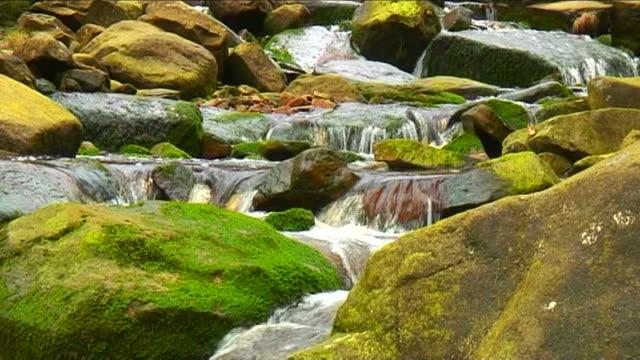 vídeos de stock, filmes e b-roll de moss rochas cobertas de fluxo - penedo