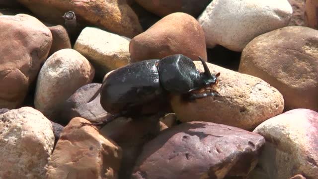 käfer 2 - käfer stock-videos und b-roll-filmmaterial