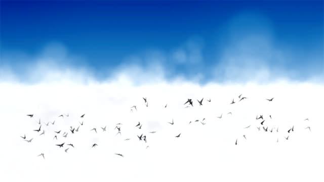 vídeos de stock, filmes e b-roll de pássaros voando com: em loop hd - cirro