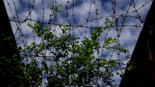 vídeos de stock e filmes b-roll de колючая проволока и ветви (arame farpado e sucursais) - berlin wall