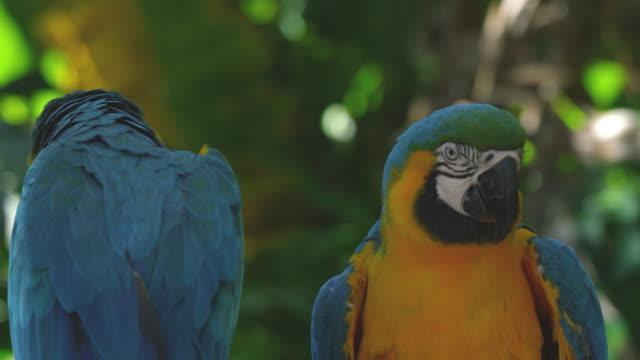 BRAZIL SCENICS video