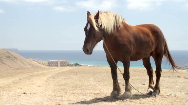 porto santo praia - stallone video stock e b–roll