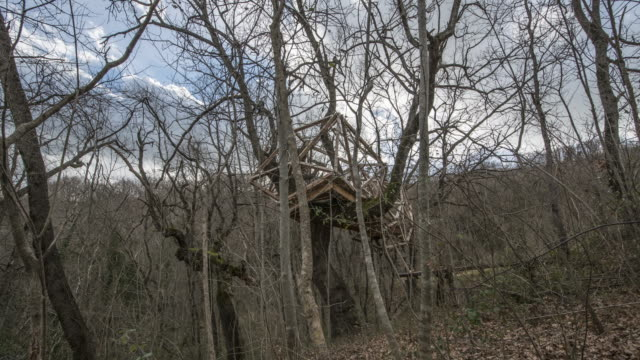 TREE HOUSE TIMELAPSE video