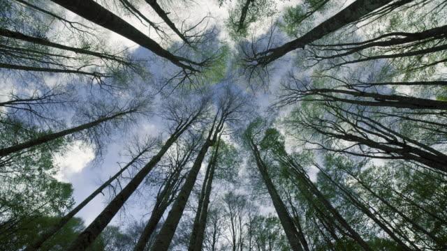 stockvideo's en b-roll-footage met beukenbos en wolken in de hemel - lang fysieke beschrijving