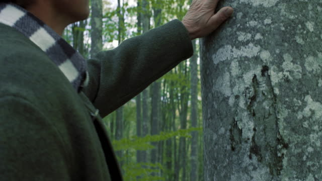 THE MAN AND THE FOREST – film