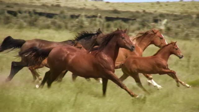 HD 1080i Wild Horses