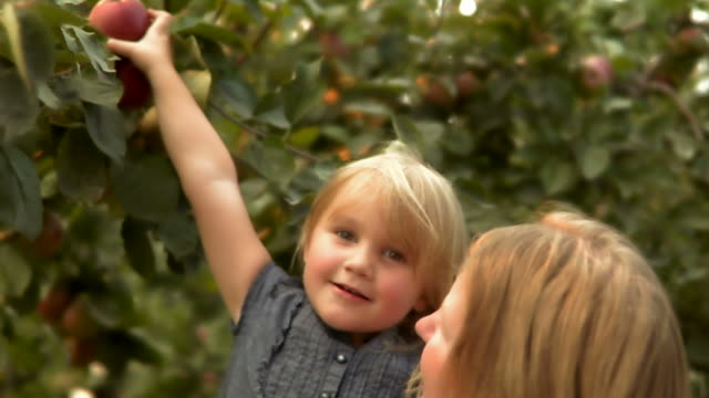 HD 1080p- Little Girl Picks Apple video