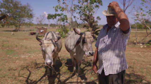 1- портрет счастливый человек фермер на работе с бычий смотреть камеры - латинская америка стоковые видео и кадры b-roll